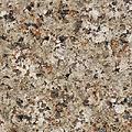 French Brown Granite - India